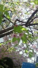 鈴木淳(しながわてれび出演者blog) 公式ブログ/お台場の桜! 画像1