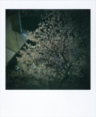 逢沢 莉緒 公式ブログ/朝だよ(∀) 画像3