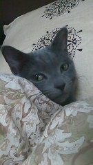 KYLA (カイラ) 公式ブログ/My baby ルナ 画像1