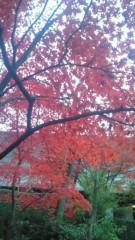 大熊亮 公式ブログ/紅葉、高揚、、、恋の爆発 画像2