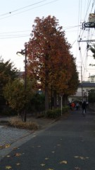 栃尾昌 公式ブログ/紅葉を見て高揚。 画像1