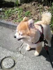 ゴジーラ久山 公式ブログ/桜さく。 画像2