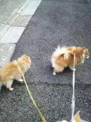 ゴジーラ久山 公式ブログ/散歩復活。 画像1