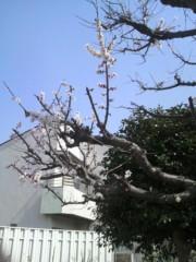 ゴジーラ久山 公式ブログ/桜さく。 画像1