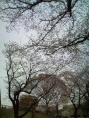 佐藤峻 公式ブログ/桜を見上げながら 画像2