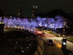 佐藤峻 公式ブログ/夜桜満開 画像1