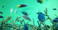 佐藤峻 公式ブログ/気ままな熱帯魚 画像1