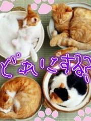 金子トモ 公式ブログ/オハニョン(* ´∇`*) 画像2