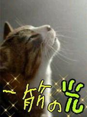 金子トモ 公式ブログ/一筋の光 画像2