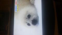 金子トモ 公式ブログ/ぐもーにん(* ´∇`*) 画像2
