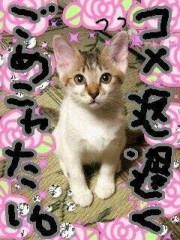 金子トモ 公式ブログ/寝ようっと(  p_q) 画像1