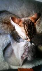 金子トモ 公式ブログ/アタイ寝る( ´-ω-`) 画像3