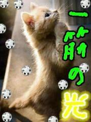 金子トモ 公式ブログ/一筋の光 画像1