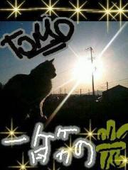 金子トモ 公式ブログ/裏筋の光 画像1