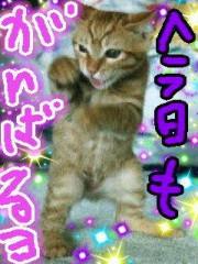 金子トモ 公式ブログ/おっはよぉございます(*^-')b 画像1