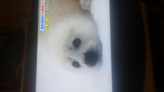 金子トモ 公式ブログ/チョコフレーク(*^^*) 画像3