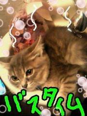 金子トモ 公式ブログ/ごちそうさまん○(* ´∇`*) 画像1