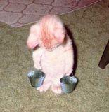 金子トモ 公式ブログ/暑いときはヤッパリ… 画像3