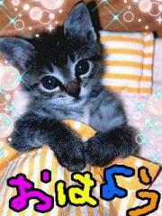 金子トモ 公式ブログ/おっぱよん(* ´∇`*) 画像1
