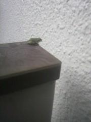 金子トモ 公式ブログ/ミルクティーにカエルを… 画像1