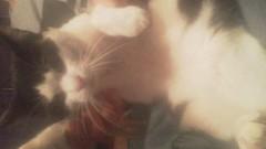 金子トモ 公式ブログ/みなたま♪ 画像2