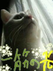 金子トモ 公式ブログ/おそようございます(^-^)/ 画像3