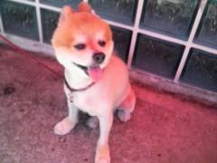 金子トモ 公式ブログ/寒くて寒くてこまっちゃぁぁう( *´∇`*) 画像3