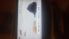 金子トモ 公式ブログ/ペット飼いたいなぁ(* ´∇`*) 画像2