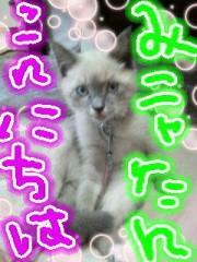 金子トモ 公式ブログ/今日は涼しげ(* ´∇`*) 画像2