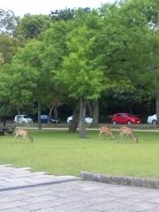岡元あつこ 公式ブログ/目に青葉…と鹿 画像1