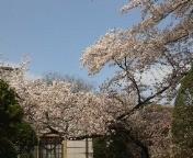 荒美由紀 公式ブログ/桜見物 画像1