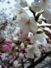 相田翔子 公式ブログ/『ぶらり桜並木』 画像1