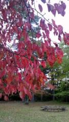 相田翔子 公式ブログ/『秋』 画像2