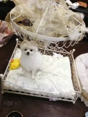 てんちむ 公式ブログ/王子帰ってキターーーーーーーー!! 画像1
