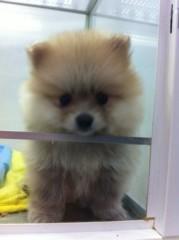 てんちむ 公式ブログ/ニコル犬とてんちむ犬 画像2