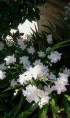 haruca 公式ブログ/♪ 画像1