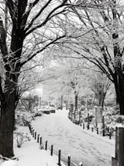石坂優子 公式ブログ/おはようー( ´ ▽ ` )ノ 画像1