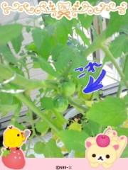 城所葵 公式ブログ/アオーイぷち菜園日記 画像1