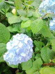 城所葵 公式ブログ/癒やしをどうぞ(^w^)パート2 画像2