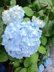 城所葵 公式ブログ/癒やしをどうぞ(^w^) 画像3