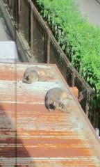城所葵 公式ブログ/ネコが二匹にゃ 画像1