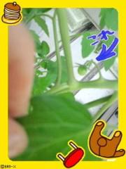 城所葵 公式ブログ/ミニトマト♪ 画像1