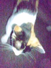 城所葵 公式ブログ/猫にゃん 画像1