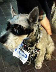 ほんまかよこ 公式ブログ/ワイルド犬! 画像1