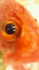 音羽七美 公式ブログ/魚 画像3