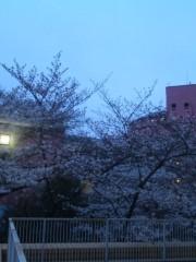串田えみ 公式ブログ/桜咲く、そして散る頃に 画像1