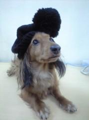 """©東京ニューアライバル / 看板犬""""くう"""" 公式ブログ/どう考えても…(^_^;) 画像1"""
