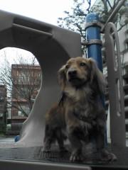 """©東京ニューアライバル / 看板犬""""くう"""" 公式ブログ/ぼくの名前は「くう」。 画像2"""