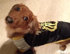 """©東京ニューアライバル / 看板犬""""くう"""" 公式ブログ/わぁーーーい(=´∀`)人(´∀`=) 画像2"""