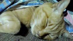 佐藤海弘 公式ブログ/愛猫 画像2